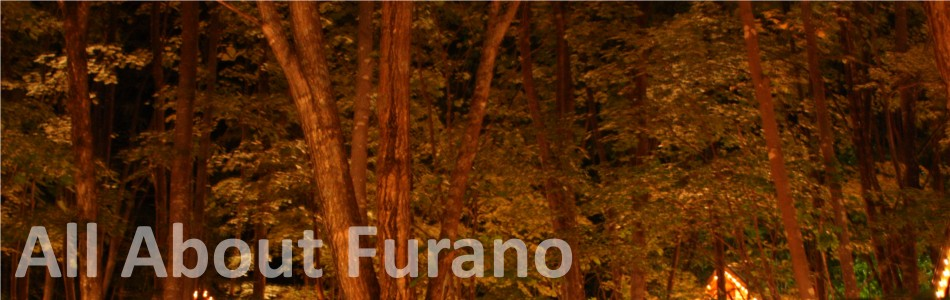 Forest in Furano